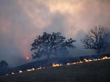 Pastwą płomieni padło ponad 6700 domów, zarówno mieszkalnych jak i biurowych